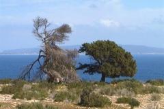 Formentera 0003